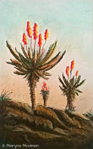 Aloes in Pastel