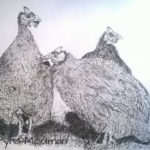 Guinea Fowl drawing in Pen and Ink