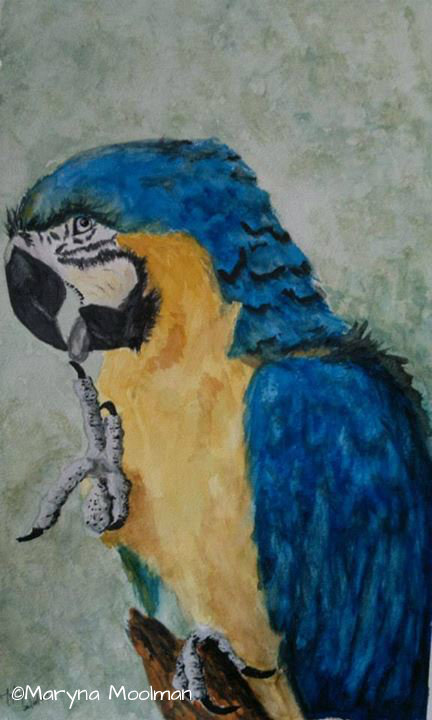 Parrot painting in Watercolor