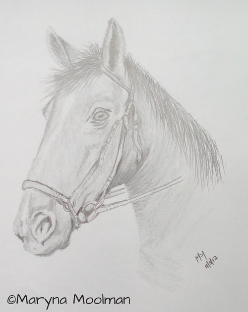 Horse drawing in Graphite